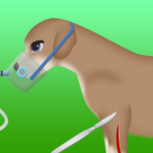 dog surgery game 2 icon