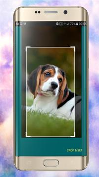 Dog Wallpapers apk screenshot