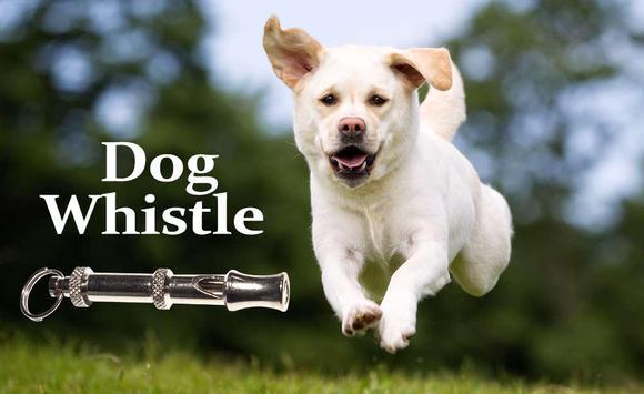 Labrador Dog Barking Sounds Free Download