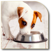 Dog Food Secrets icon