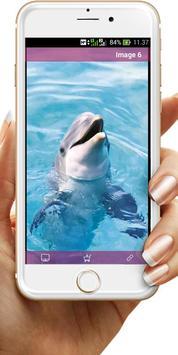 Dolphin Wallpaper poster
