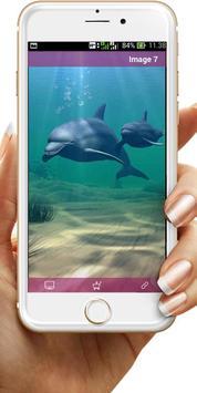 Dolphin Wallpaper screenshot 1