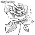 Drawing Flower Design