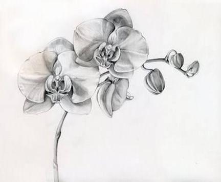 Drawings To Sketch screenshot 2