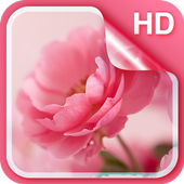 Pink Roses Live Wallpaper icon
