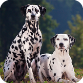 Dalmatian Live Wallpaper icon