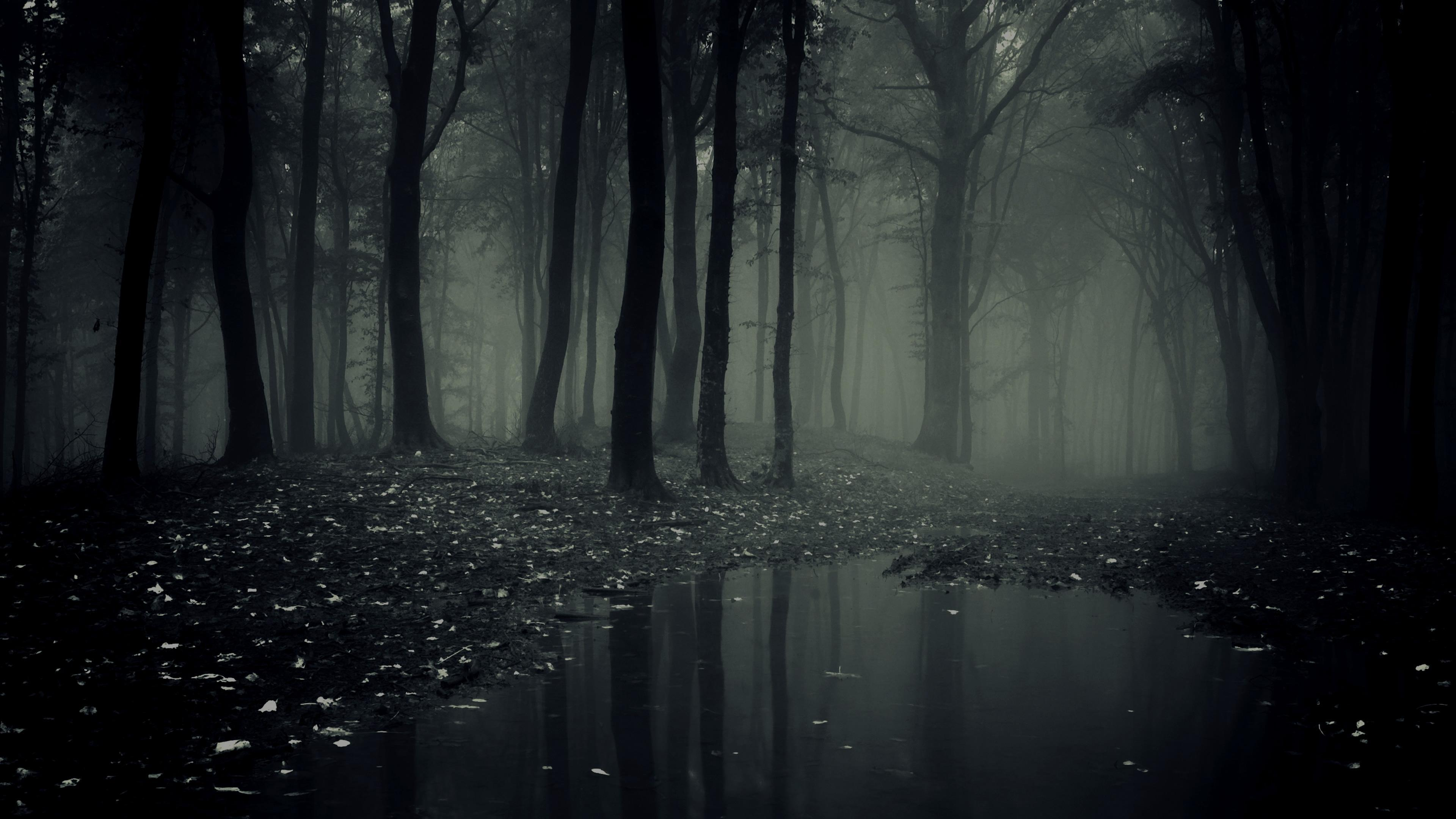 Dark Forest Live Wallpaper for Android - APK Download