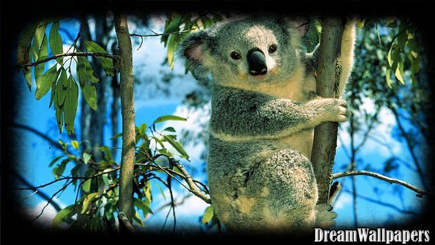 Koala Wallpaper apk screenshot