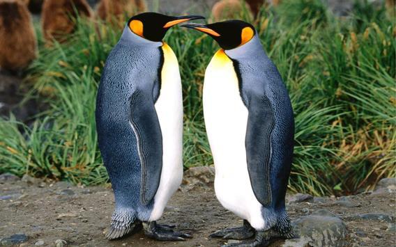 Penguins Live Wallpaper poster