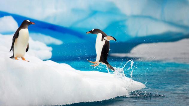 Penguins Live Wallpaper apk screenshot