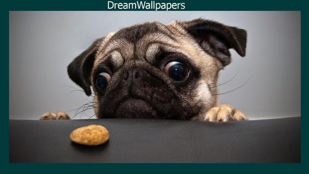 Pug Live Wallpaper apk screenshot