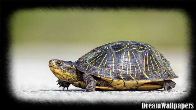 Turtle Wallpaper apk screenshot