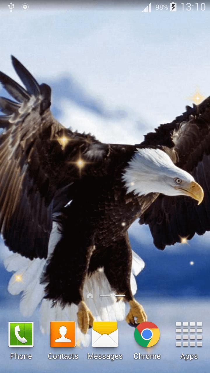 740+ Download Gambar Burung Rajawali Hd Gratis Terbaik
