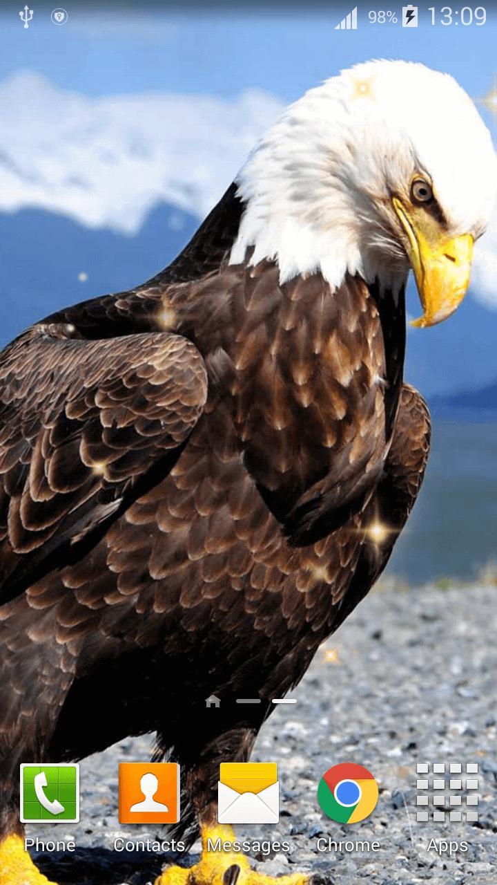 Unduh 102 Wallpaper Bergerak Burung Elang Paling Keren
