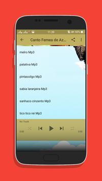 Canto Femea de Azulao Top Mp3 screenshot 3