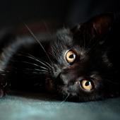 Black Cats Wallpaper icon