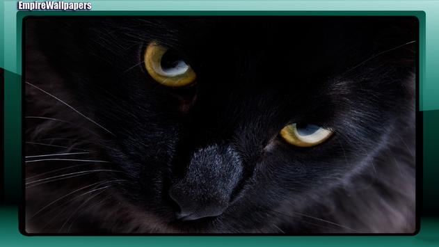 Black Cats Wallpaper apk screenshot