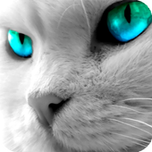 Eyes Cat Live Wallpaper icon