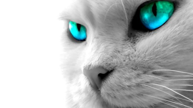 Eyes Cat Live Wallpaper poster