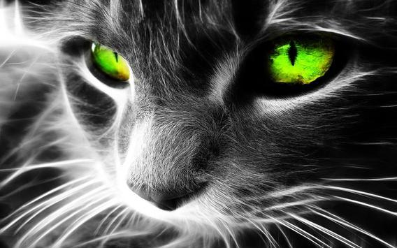 Eyes Cat Live Wallpaper screenshot 2