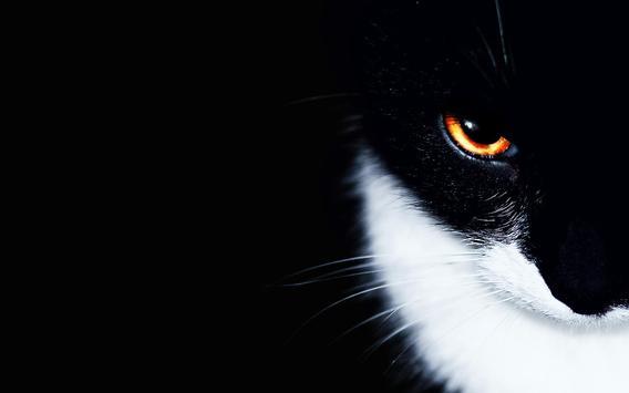 Eyes Cat Live Wallpaper screenshot 3