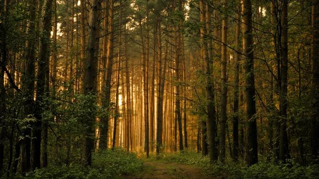 Forest HD Live Wallpaper APK Download Free Personalization APP