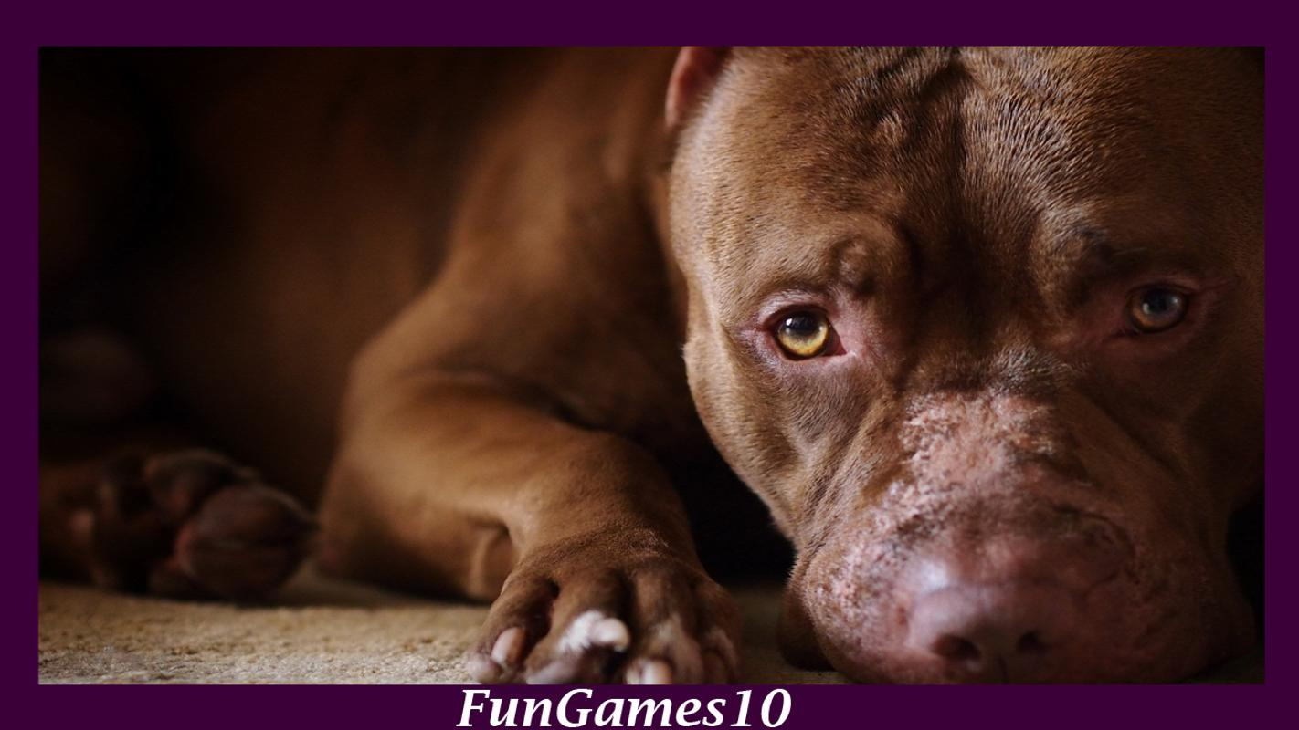 ... Pitbull Dog Wallpaper screenshot 3