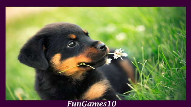 Rottweiler Dog Wallpaper apk screenshot