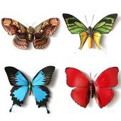 Butterfly Memory - Zen icon