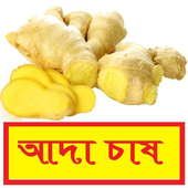 সঠিকভাবে আদা চাষ পদ্ধতি ~ Ginger Cultivation icon