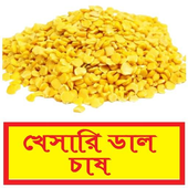 সঠিকভাবে খেসারি ডাল চাষ পদ্ধতি~Khesari Cultivation icon