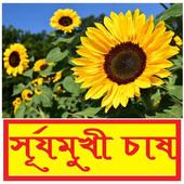 সঠিকভাবে সূর্যমুখী চাষ ~ Sunflower Cultivation icon