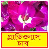 গ্লাডিওলাস ফুল চাষ পদ্ধতি ~ Gladiolus Cultivation icon