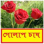 গোলাপ ফুল চাষ পদ্ধতি ~ Rose Flower Cultivation icon