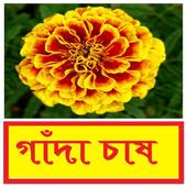 গাঁদা ফুল চাষ পদ্ধতি ~ Tagetes Flower Cultivation icon
