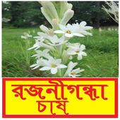 রজনীগন্ধা ফুল চাষ পদ্ধতি icon