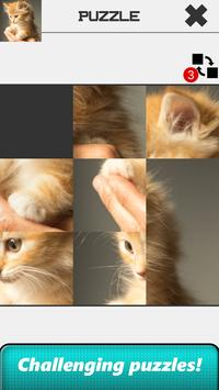 Cat Slide Puzzle screenshot 1