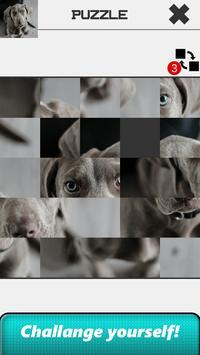Dog Slide Puzzle screenshot 19