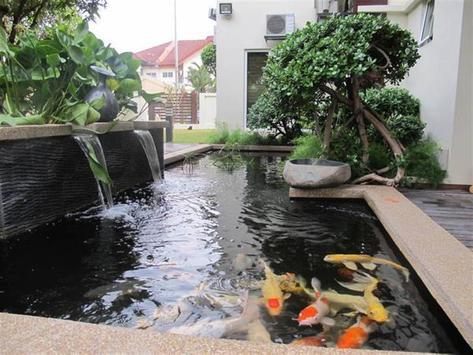 Fish Pond Designs apk screenshot