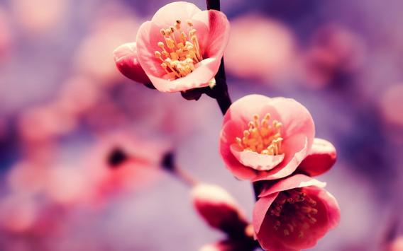 Flowers Wallpaper poster
