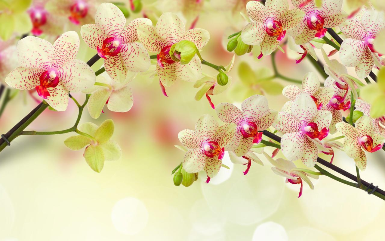 Flowers Live Wallpaper Apk Download Free Personalization App For