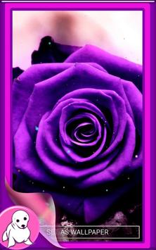 Purple Rose Live Wallpaper screenshot 5