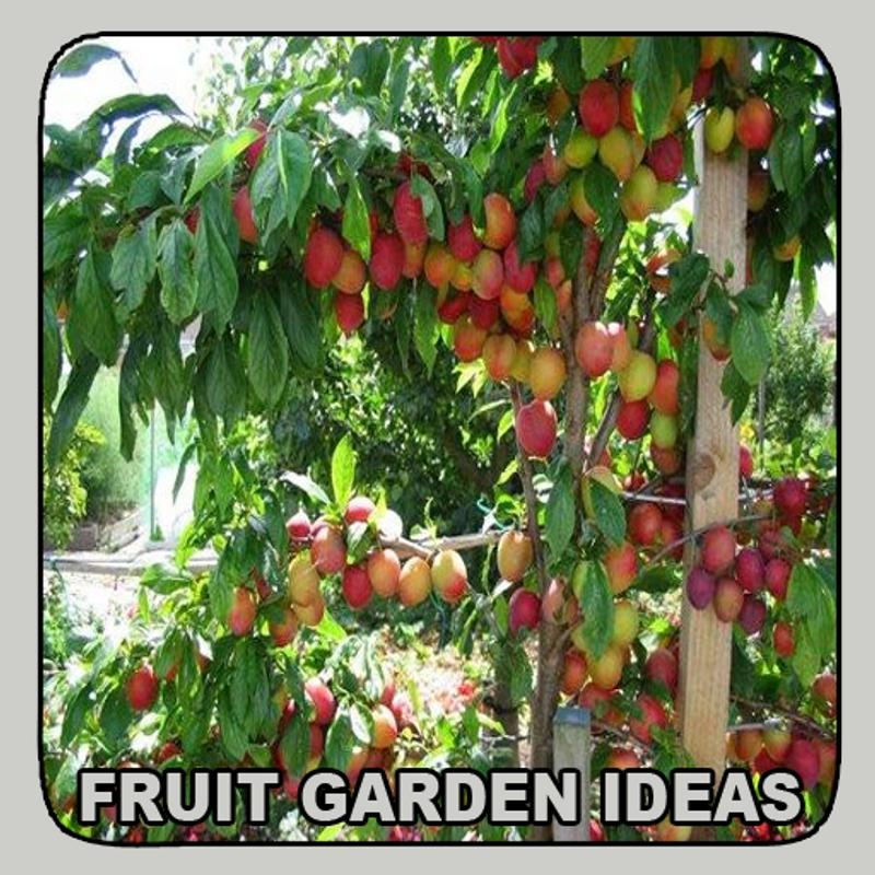 Fruit Garden Ideas APK Download - Free Lifestyle APP for Android ...