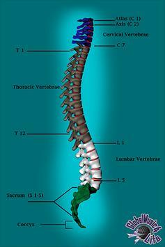 GM4L Spine Bone Game poster