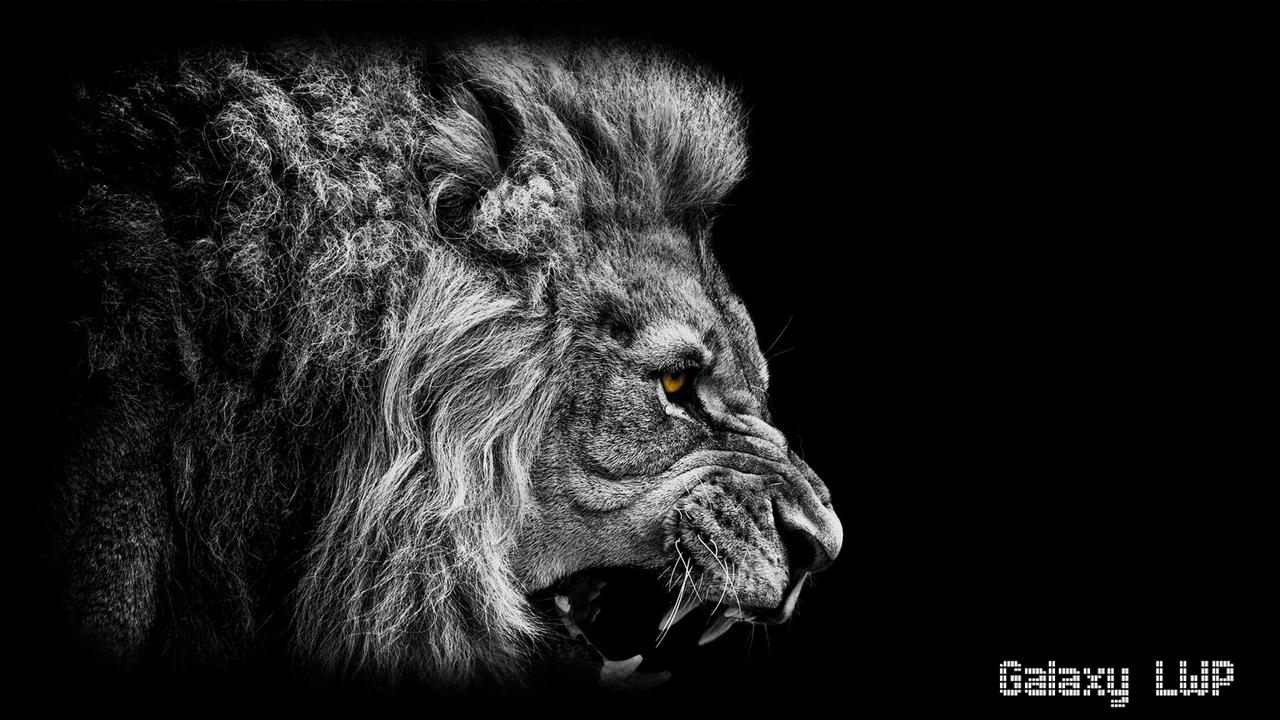 Black Lion Wallpaper For Android Apk Download