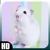 Hamster Wallpaper icon