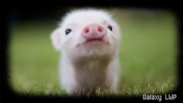 Little Pig Wallpaper screenshot 3
