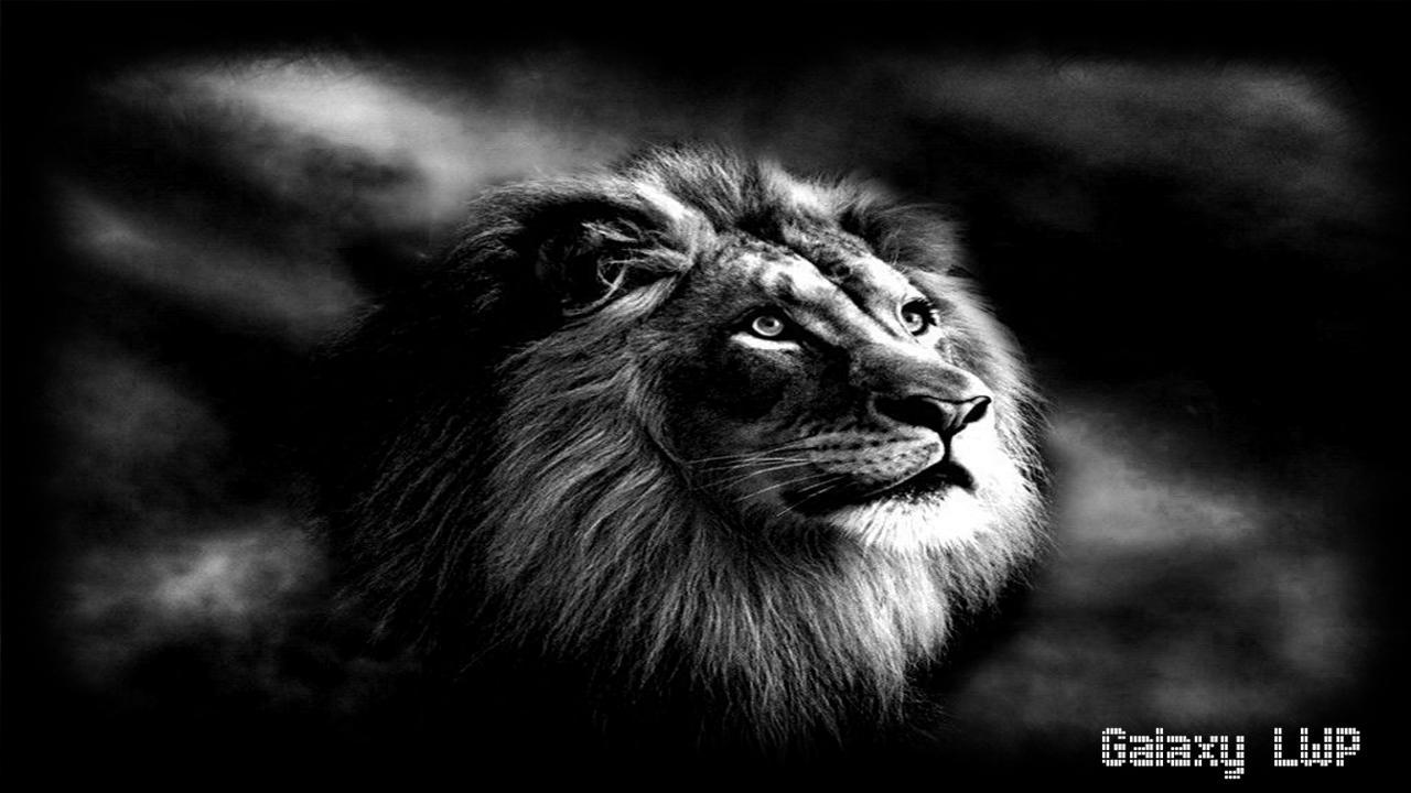 Black Lion Pack 3 Wallpaper For Android Apk Download