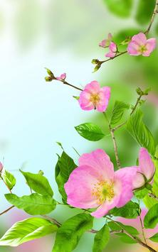 Gentle Flowers Live Wallpaper apk screenshot