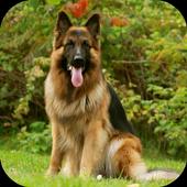 German Shepherd Wallpaper icon
